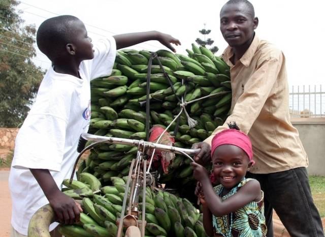 kochbananen_ernte_uganda.jpg
